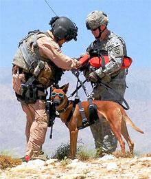 Vloga psa v človekovem okolju, reševalni pes