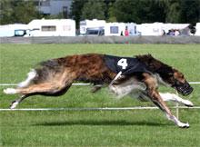Vloga psa v človekovem okolju, tekmovalni pes