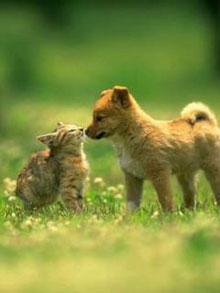 V domačem ter tujem okolju, Spoznavanje drugih živali in ljudi