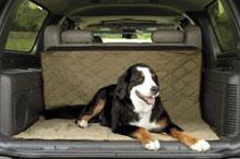 Privajanje psa na vozilo ter ovratnica in povodec, Pes v avtu