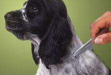 Nega psa, krtačenje in striženje