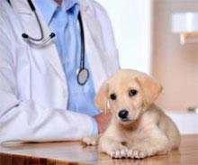 S psom pri veterinarju