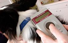 Označevanje psov z mikročipi