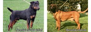 Splošno o vzgoji ter socializaciji psa, Nemski lovski terier in Bavarski barvar