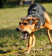 Najpogostejši razlogi za agresivnost pri psu, Agresiven pes