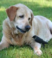 Zakaj posvojiti invalidnega psa, Starejši, bolan pes