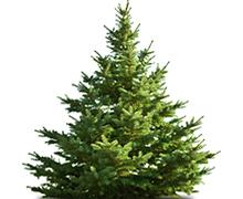 Božična jelka