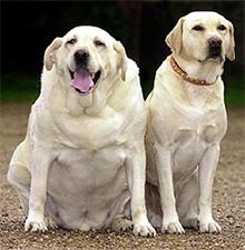 Posledice čezmerne telesne teže ter zmanjševanje telesne teže