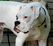 Zakaj posvojiti invalidnega psa, Gluh pes
