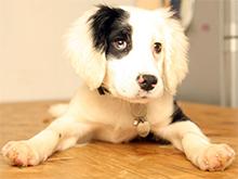 Življenje z gluhim psom