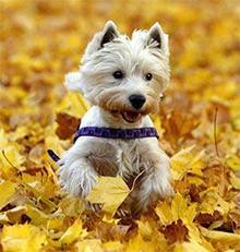 Zagon imunskega sistema - Ko pride jesen!