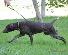 Zgodba psičke Atile