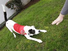 Nasveti za komuniciranje z gluhim psom ter vzgoja gluhega psa