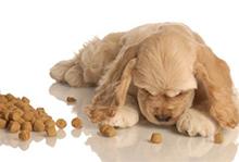 Splošno o pasji prehrani, Pasja prehrana