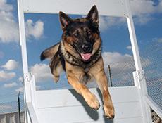 Oglaševanje, Obrazec za objavo pasjih šol ter ostalih pasjih dejavnosti