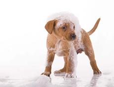 Oglaševanje, Obrazec za objavo pasjih salonov