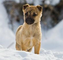 Pes in zimski čas