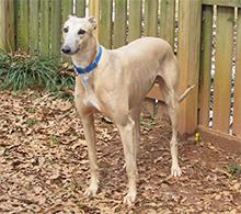 Pes na dvorišču