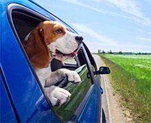okna avtomobila naj bodo odprta