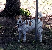 pes za ogrado
