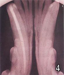 Poškodbe zob pri psu