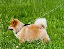 Prehitro gibanje psa