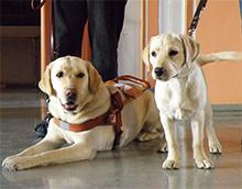 Psi pomočniki slepih ter slabovidnih oseb