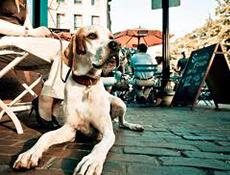 Oglaševanje, Obrazec za objavo psom prijaznih lokalov