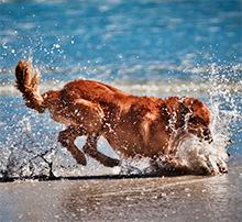Vroči pasji dnevi so tu, S psom na morje