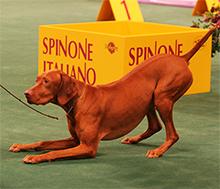 Pasja razstava, svet pasjih razstav