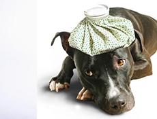 Oglaševanje, Obrazec za objavo veterinarskih ambulant